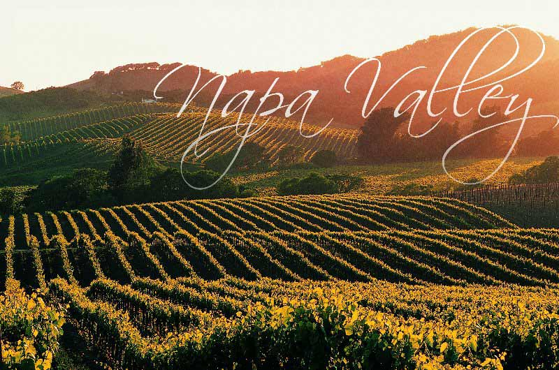 Napa Valley Tours services in San Francisco, Bay Area and East Bay Area.